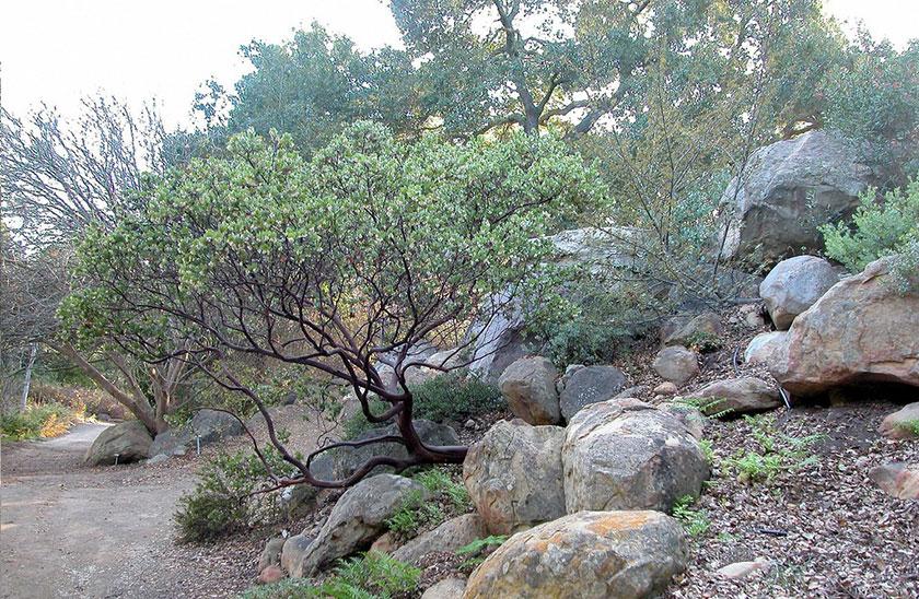 Santa Ynez Valley Tree Care